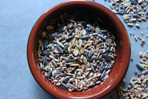 Bird Seed: What You Need to Know