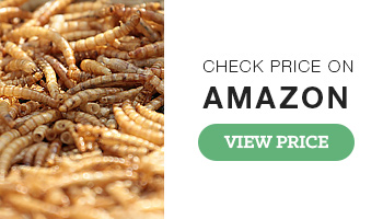 MBTP Dried Mealworms for Birds