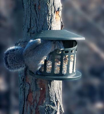 Heritage Farms Squirrel Diner - Two Squirrel Feeder