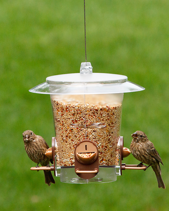 Perky-Pet Metro Bird Feeder